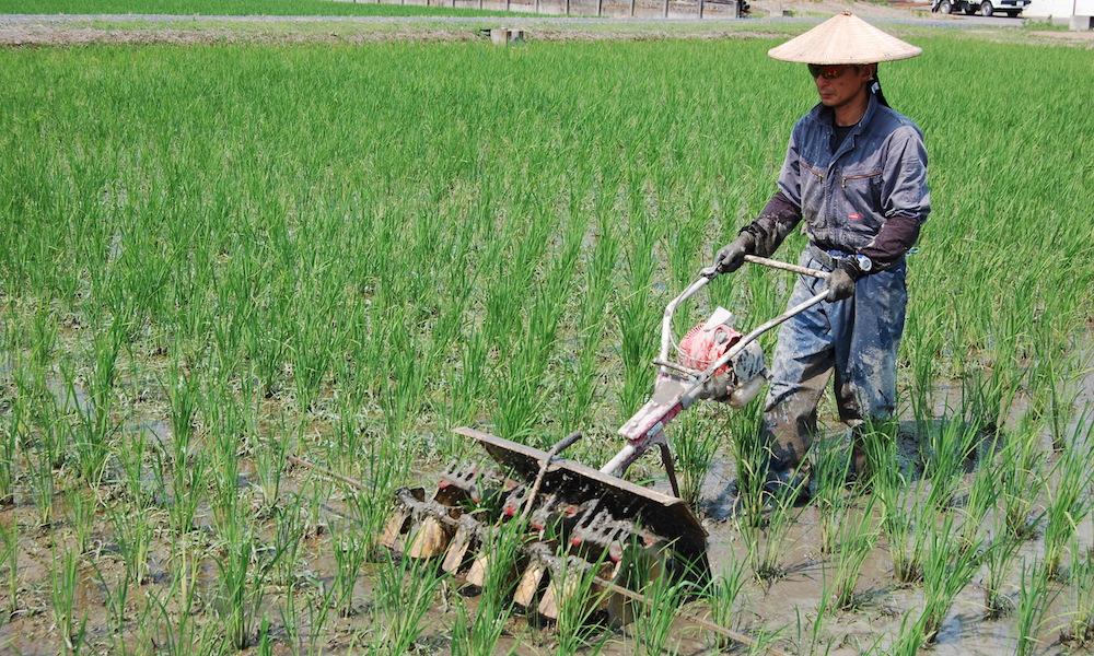 いのちの壱の栽培方法